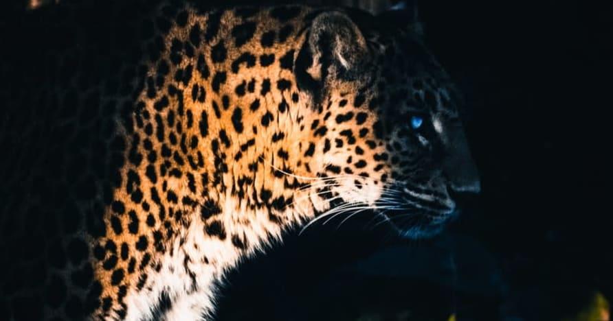 Yggdrasil Partners ReelPlay släpper Jaguar SuperWays från Bad Dingo